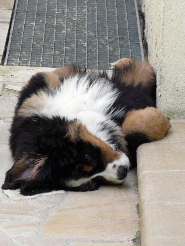 Ma position favorite pour dormir !